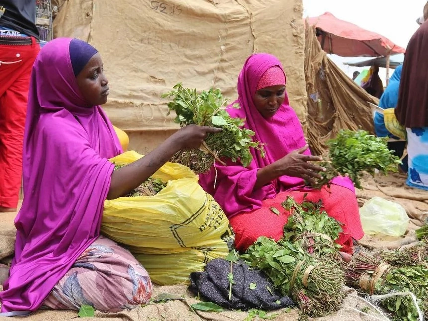 Mombasa men who chew Miraa can no longer perform in the bedroom