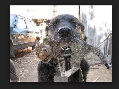 Amistad verdadera. Perro heroico se lanza al fuego para salvar un gatito