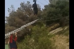 Mystery In Greece As Goat Is Found Hanging From Telephone Line