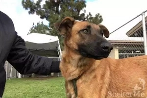 Shelter Dog Is Excited To See Former Owners, But They Don't Take Her Home