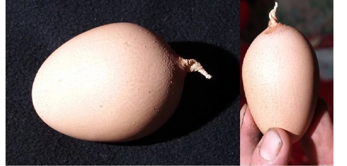 Check this out! Strange eggs with tails were found in China!