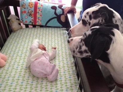 5 beautiful pictures that show just how much dogs love newborn babies