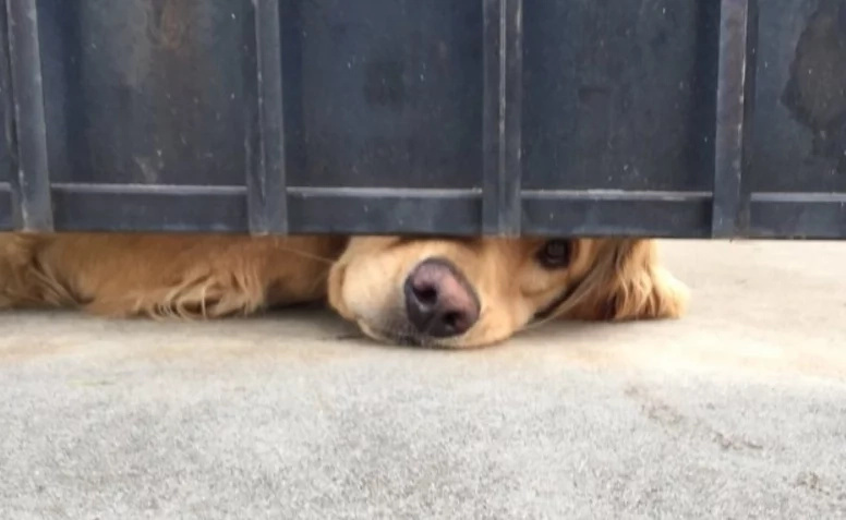 Heartbroken Dog Is Lying For Hours In The Same Place Every Day And The Reason Leaves People Speechless...