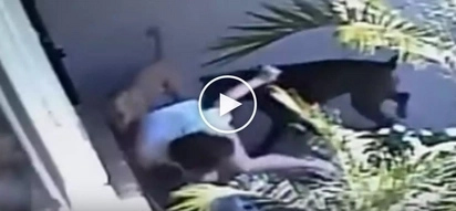 Kawawang mag-ina! Violent dogs' brutal attack on helpless mother and child caught on video