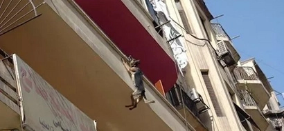 This Dog Had Been Chained To A Balcony Forever...So She Did Something Heartbreaking