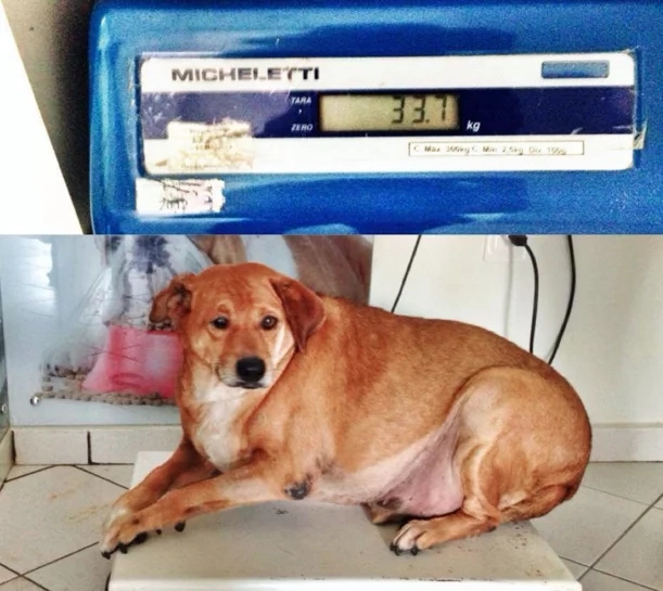 Touching: Abandoned, obese dog transforms into a healthy, well-loved pet