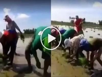 Ang galing naman nila! These farmers in Bataan sing while planting rice