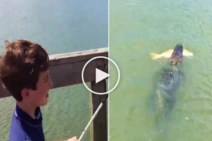 Watch out! A child was fishing when suddenly this alligator came out!