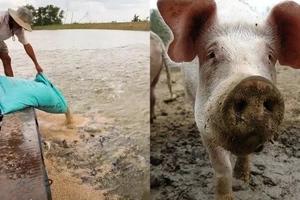 Kadiri naman! FDA warns people of eating Tilapia being feed with animal feces
