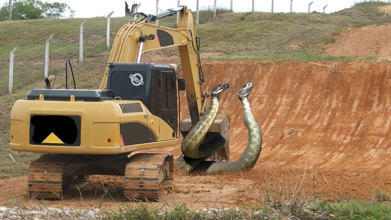 This Anaconda Definitely Don't Want None! Must-watch: INTERESTING VIDEO of Anaconda vs. Tractor Excavator