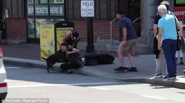 Pitbull ataca salvajemente a pequeño beagle y su dueña
