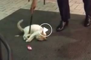 Cute cat thinks she owns the entrance of a local fast food chain in MOA