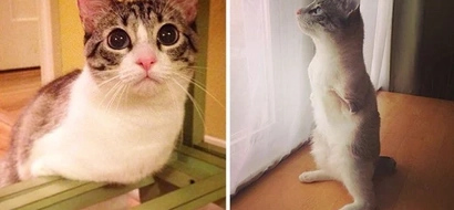 This two-legged cat's story will touch your heart