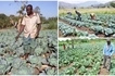 These Ugandan brothers show how to make MILLIONS from commercial cabbage farming (photos)