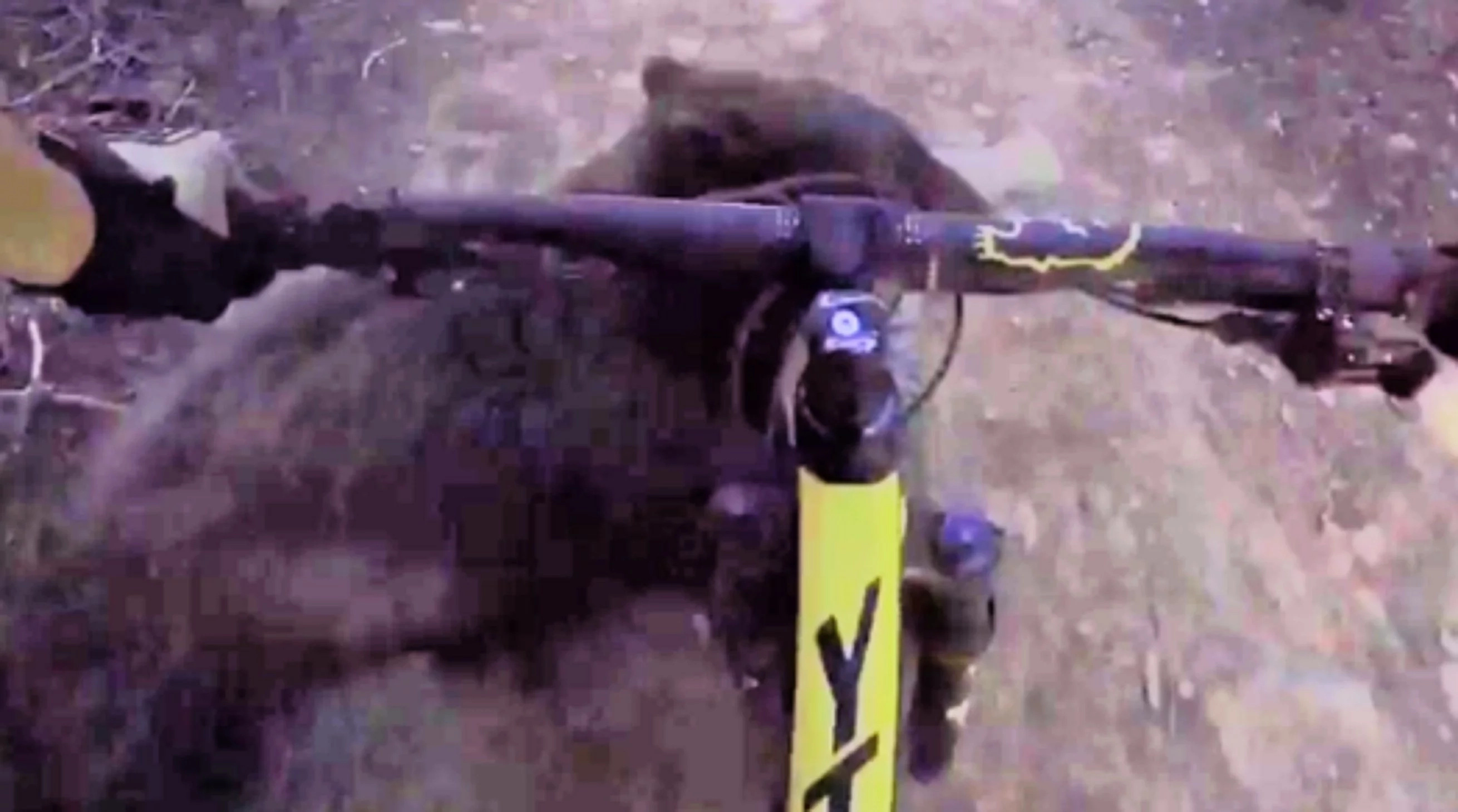 Guy Rides A Bike With GoPro, Then Bear Showes Up... (Video)