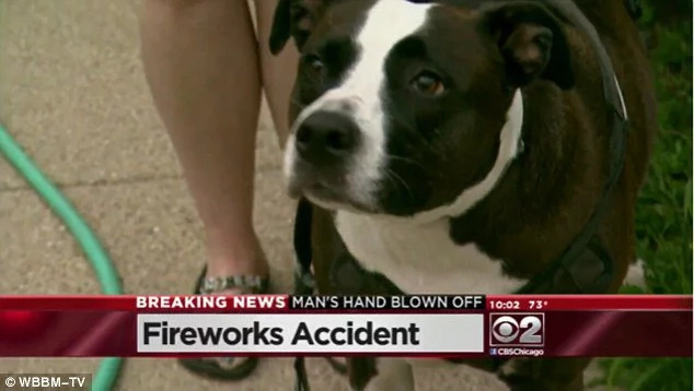 Dog finds man's fingers after a firework accident
