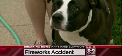 [VIDEO] Find out what this dog found after a firework accident!