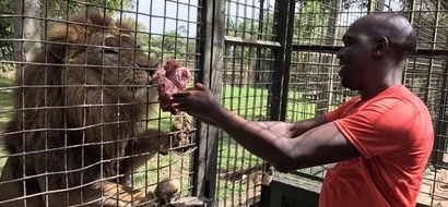 Larry Madowo chased by two cheetahs in Uganda (video)