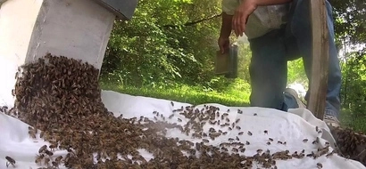 TRAGEDY after popular politician is killed by bees