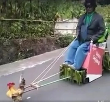 Rooster pulls loaded cart, video went viral