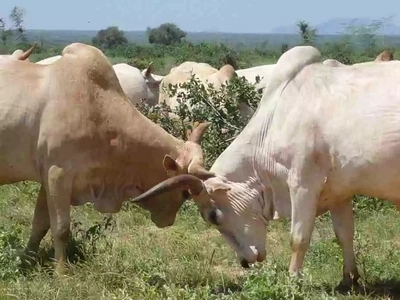 Police officer dies in Garissa accident involving cows