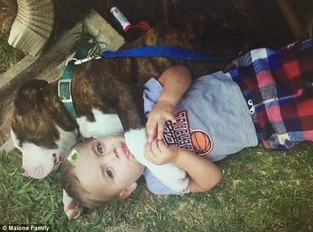 A little boy's birthday turned into tragedy when outrageous cop did this to his beloved dog
