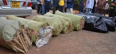 Vehicle Ferrying KSh 2.5M Worth Of Bhang Nabbed After Accident