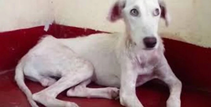 Watch this poor dog's transformation into a healthy animal