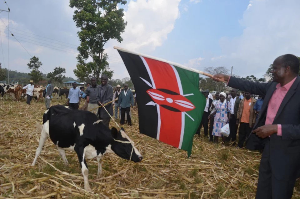 Governor ridiculed for using national flag to commission a dairy event