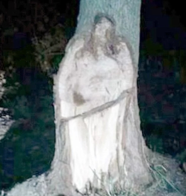 Netizens surprised over viral photo showing off tree that looks like Jesus