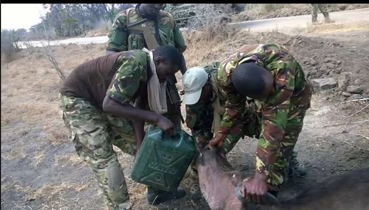 KDF officers meet a dying buffalo, what they do next will leave you gushing