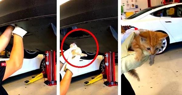 Kitten-rescue