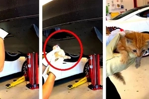 Driver found a kitten trapped in his car's rear bumper. The poor animal's heart-stopping rescue was caught on video!