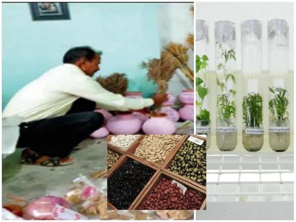 This man developed 460 varieties of paddy, 120 varieties of wheat, 50 varieties of beans (photos, video)