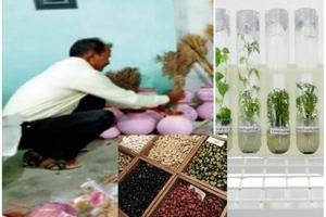 Meet school dropout who developed 460 varieties of paddy, 120 varieties of wheat, 50 varieties of beans (photos)