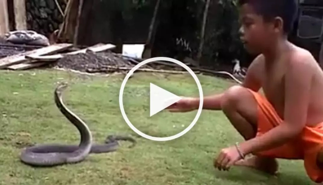 Brave boy battled deadly cobra and he nailed it