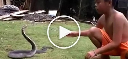 A small boy from Ifugao battles a DEADLY cobra!