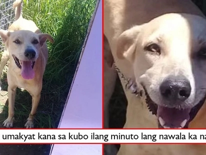 Loyal hanggang kamatayan! Pet dog shields master from attack of venomous snake, dies a few minutes after wrestling with viper!