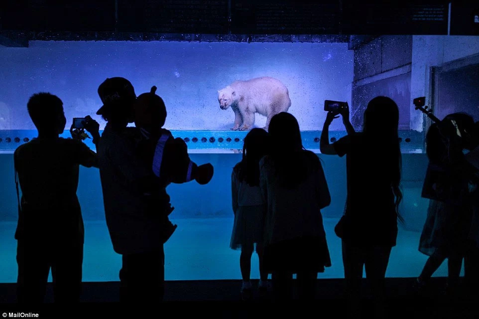"Miserable story of ""the world's saddest polar bear"" trapped inside Chinese mall will break your heart"