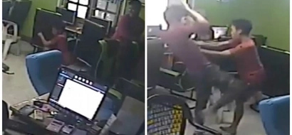 Feisty snake flies into café, bites man's BEHIND as customers run helter-skelter for safety (photos)