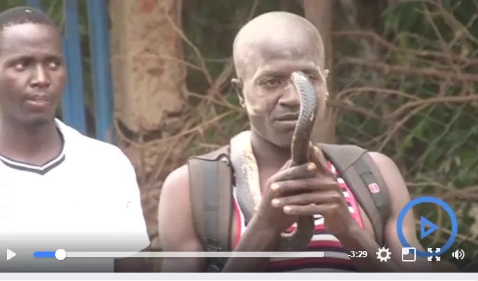 Rare spectacle as foreign witch-doctor's snake slithers into Kenya to smoke out a thief