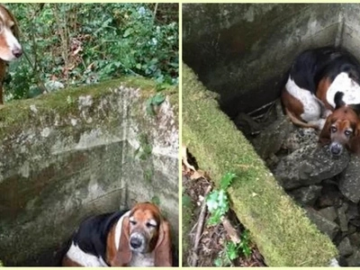 Loyaler Hund wacht über einen gefangenen Freund für eine Woche