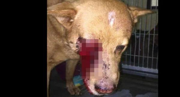 Organizaciones de rescate se solidarizan con perro golpeado brutalmente con un bate