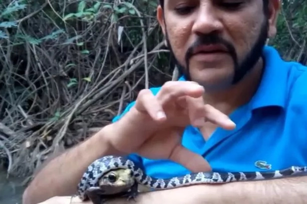 Man puts deadly snake and frog in his mouth (Video)