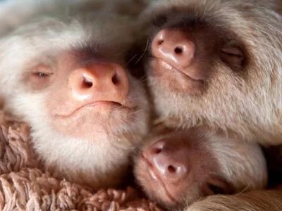 Estas fotos de perezosos bebés rescatados son increíblemente tiernas