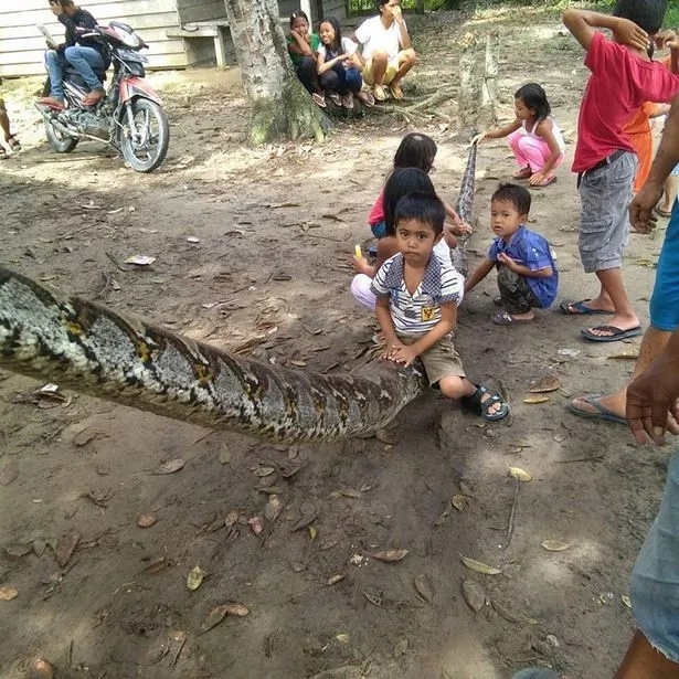 Locals eat giant python after it attacked local Indonesian man