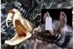 Woman angrily bites venomous snake in revenge attack, both end up dead