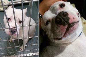 Estás fotos de antes y después de animales adoptados restaurará tu fe en la humanidad