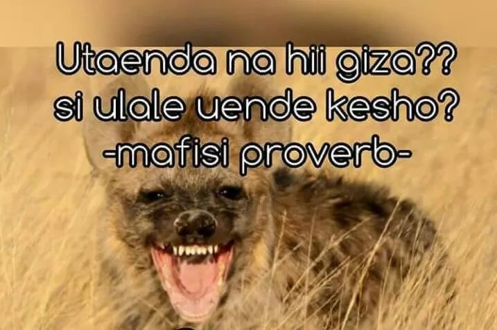 The 9 types of Mafisi sacco men according to social media