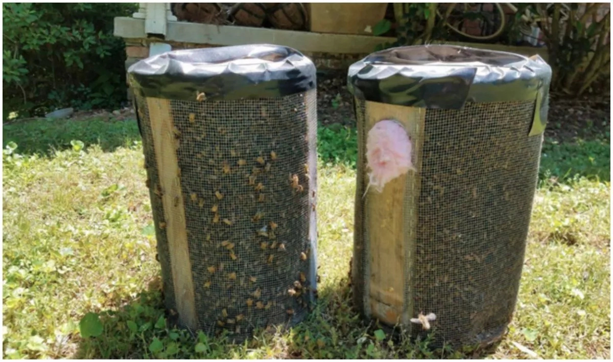 The beekeeper was able to collect the bees into large canisters